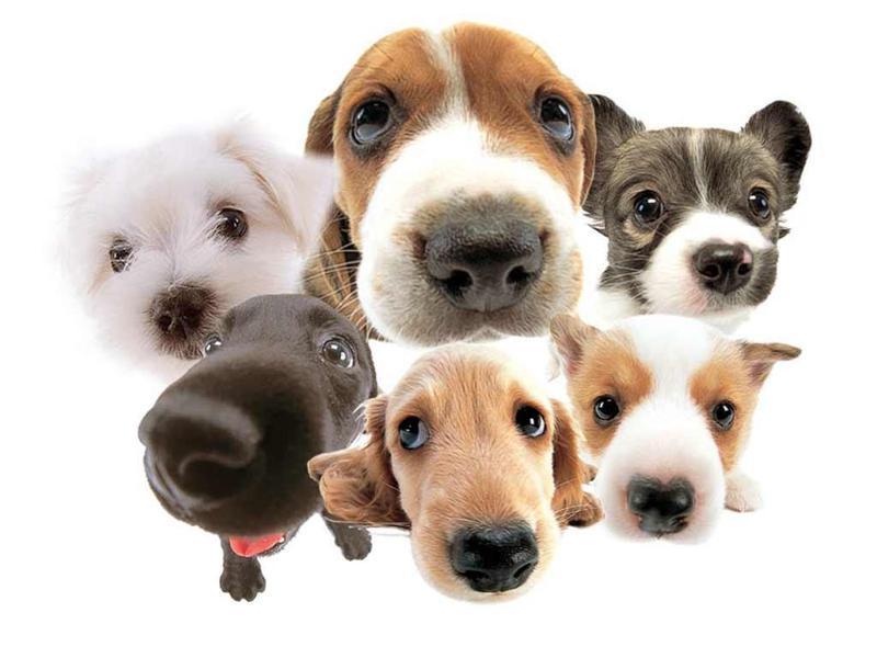 Выбираем породу собаки