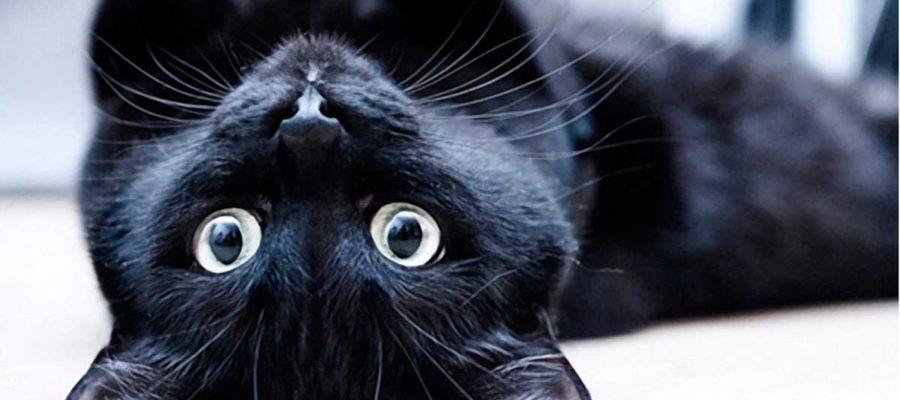 Эти загадочные коты
